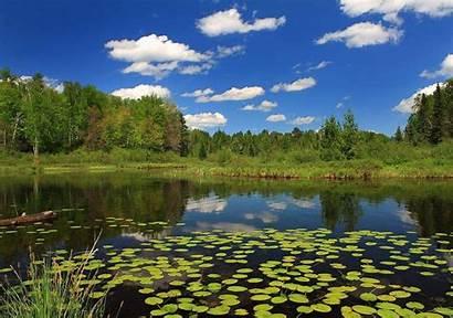 Pond Desktop Wallpapers Ponds Backgrounds Background Choices