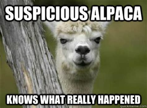 Llama Birthday Meme - suspicious alpaca knows what really happened suspicious alpaca quickmeme