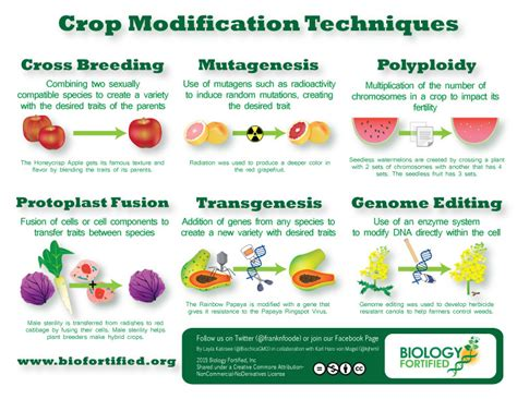 Modification Utation by Crop Modification Techniques Infographic Biology