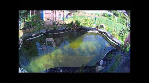 algen im teich vernichten algen im gartenteich entfernen hd