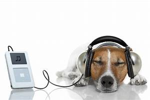 The effect of listening music for pets / PetsPyjamas