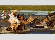 Pantanal Trail Ride Safari Gaucho do Brasil