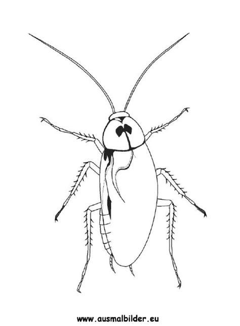 ausmalbild kakerlake zum ausdrucken
