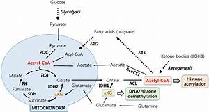 Metabolic Pathways To Generate Acetyl