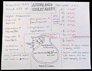 Ph Of Amino Acids Chart