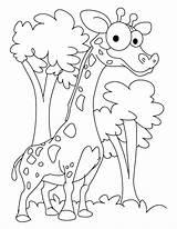 Giraff Bestappsforkids Ambitious Golfrealestateonline sketch template