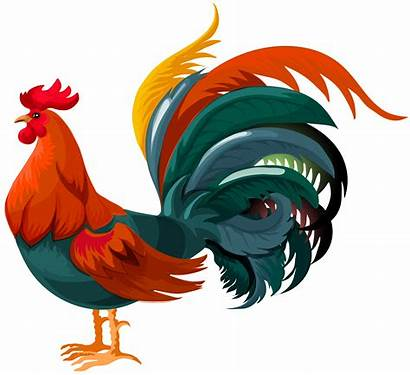 Rooster Clipart Transparent Clip Chicken Gallo Yopriceville