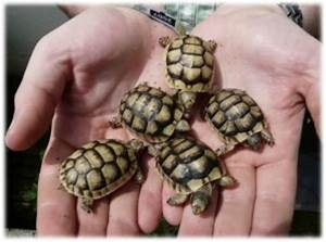 Acheter De La Terre : o acheter une tortue terrestre ~ Dailycaller-alerts.com Idées de Décoration