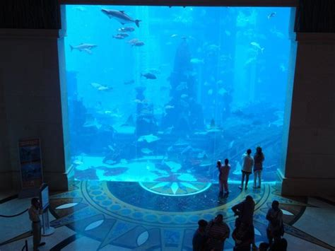 dubai hotel aquarium atlantis atlantis the palm fish tank picture of atlantis the