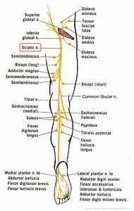 Sciatica  A Pain In The Rump