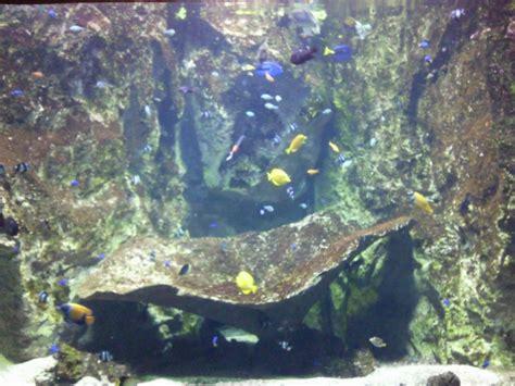 visite aquarium du grand lyon