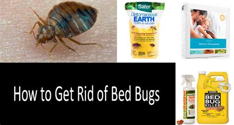 rid  bed bugs  bombs  foggers