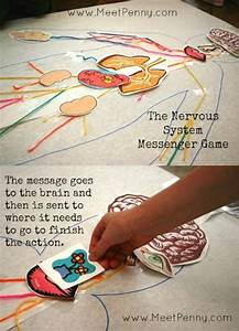 17 Best Images About Anatomy For Kids On Pinterest