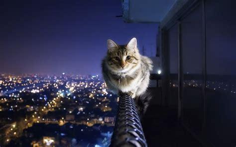courageous cat sits   city hd wallpaper
