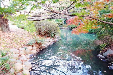 shinjuku gyoen national garden shinjuku gyoen national garden affordorable