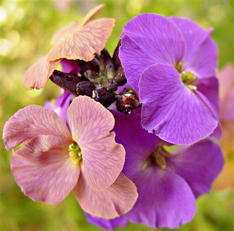 fall perennial flowers fall perennial flowers jpg hi res 720p hd