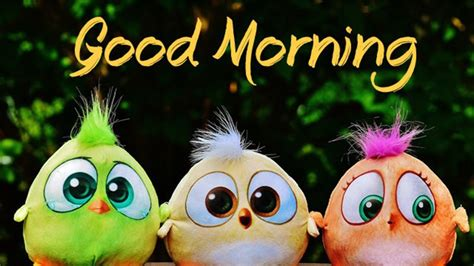 good morning images hd pictures good morning wishes
