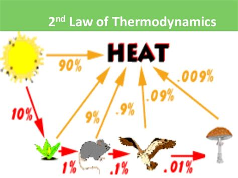Laws Of Thermodynamics In An Ecosystem