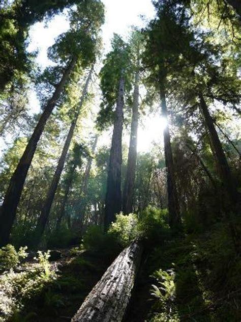 mendocino tree ukiah
