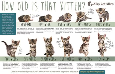 kittens big cat rescue