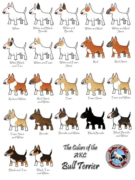 bull terrier colors fancy fawn bull terriers strictly bull terriers