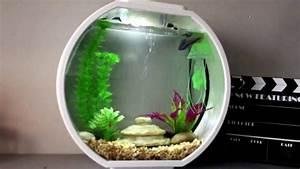 Deco Aquarium Zen : new betta in aa deco o mini aquarium 2 6 gallons youtube ~ Melissatoandfro.com Idées de Décoration