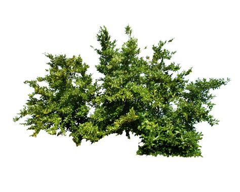 balsam fir tree water кусты png фото куст png скачать бесплатно и без регистрации
