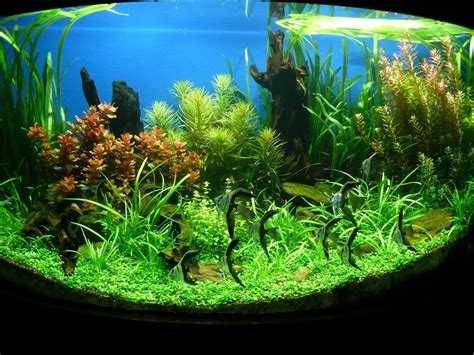 fish aquariums aquarium plantation fish tanks decoration fish tank best