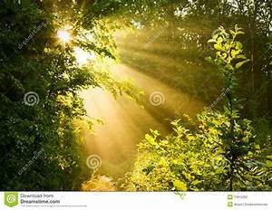 Early Morning Sun In Forest Stock Photo - Image: 15912262