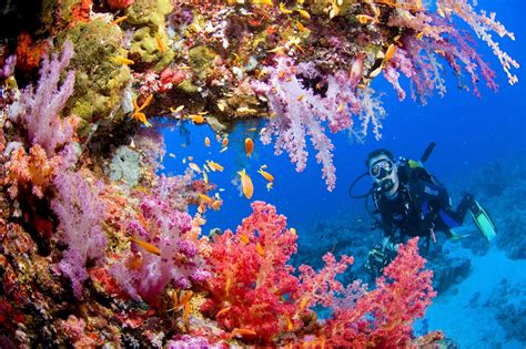coral reef wallpaper desktop hd wallpapers free downloads coral reef hd wallpapers Underwater