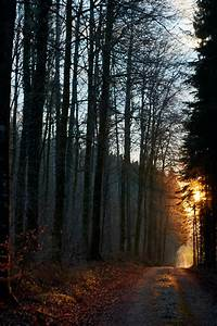 Download, Wallpaper, 4000x6000, Forest, Path, Sun, Rays, Evening, Hd, Background