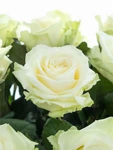 Hornspäne Für Rosen : rosen avalanche wei bestellen blumigo ~ Eleganceandgraceweddings.com Haus und Dekorationen