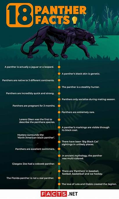 Panther Facts Animals Amazing Infographics