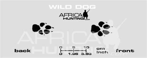 predator tracks africahuntingcom