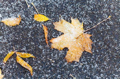 Daudzviet valstī sestdien uzsnidzis sniegs. Laika prognoze ...
