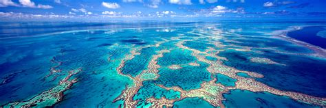great barrier reef  hardy reef print mark gray
