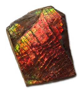 Ammolite Gemstone Found