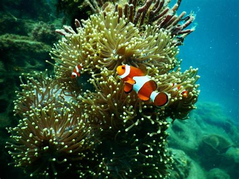 aquarium ikan hias minimalis biar awet penting rawat