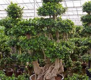 Hydrokultur Pflanzen Kaufen : hydrokulturpflanzen in auswahl archive hydrokulturen begr nungen mietpflanzen b ropflanzen ~ Buech-reservation.com Haus und Dekorationen
