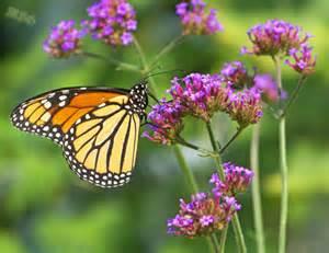 Monarch Butterfly Garden Plants