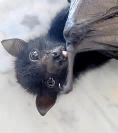 Baby Fruit Cute Bat