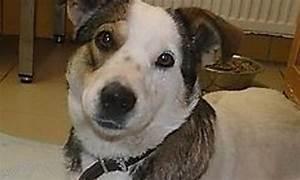 Kleiner Zaun Für Hunde : hunde trag die bei purzel vicky ~ Frokenaadalensverden.com Haus und Dekorationen