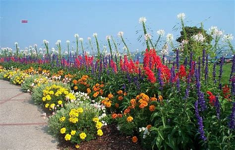 Panoramio  Photo Of Flowers At The Jfk Memorial, Hyannis