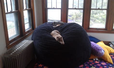 Craigslist Lovesac by My Miniature Husky Puppy Napping In An Sized Bean Bag
