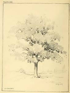 drawing foliage shrubs and trees how to draw foliage
