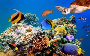Underwater, World, Corals, Wallpaper, Hd, Widesreen, 520x3250