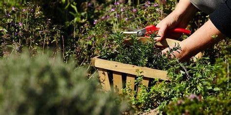 Kräutergarten Anlegen Für Einsteiger
