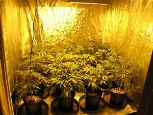 Indoor Grow Anleitung : cannabis grow anleitung ~ Eleganceandgraceweddings.com Haus und Dekorationen