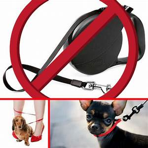 Why Retractable Leashes Are Dangerous at a Veterinary ...