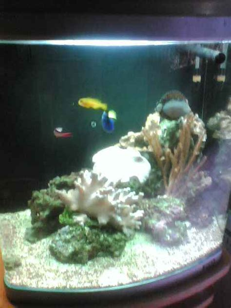 aquarium eau de mer fish only encombrement place